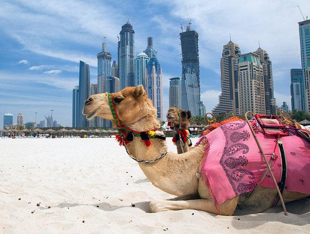 Золотые визы в ОАЭ собрали 100 млрд. дирхамов